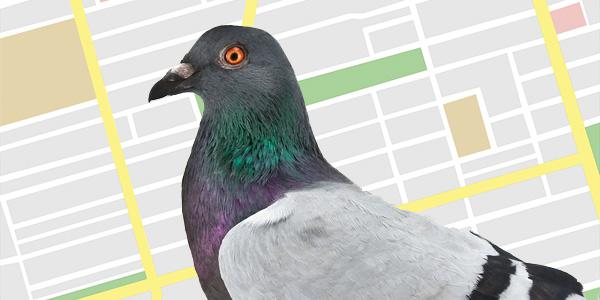 Google Pigeon – Thuật toán chim bồ câu và những điều cần biết